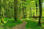 Chemin-forestier 3